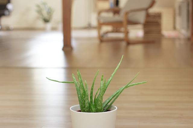 15 растений для очистки воздуха в вашем доме